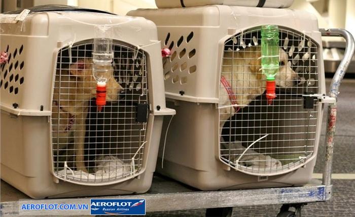 Aeroflot quy định vận chuyển động vật sống