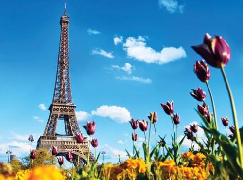 Paris2_530x393