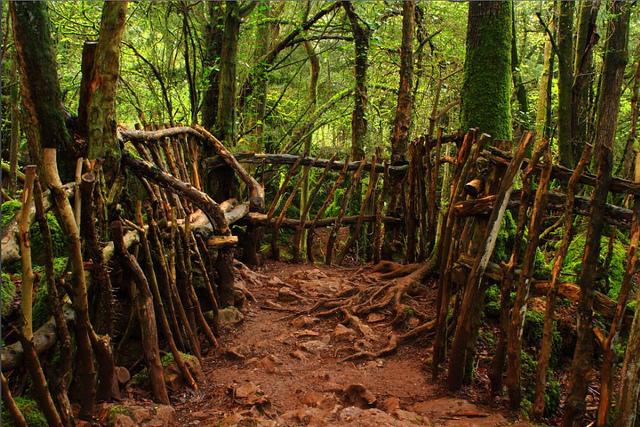 Puzzlewood - khu rừng mê cung huyền bí