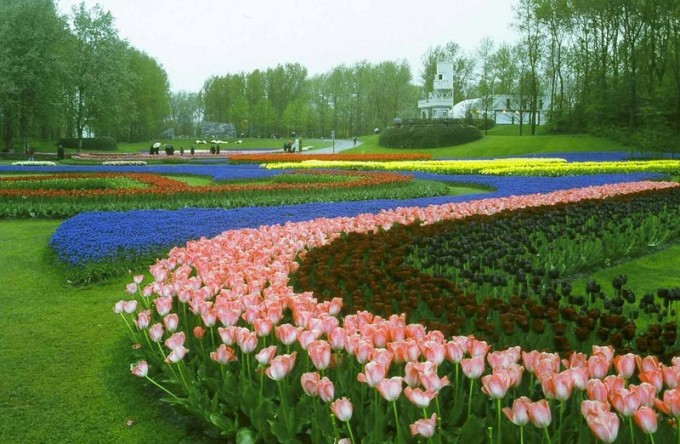 Lễ hội hoa1
