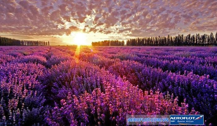 hoa oai huong2
