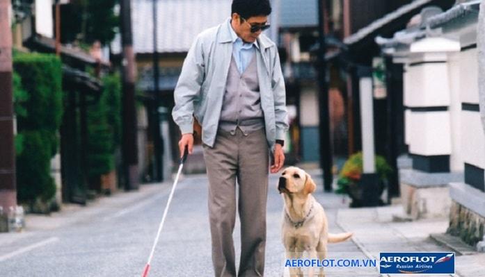 Chó dẫn đường sẽ được chỉ định ngồi gần hành khách
