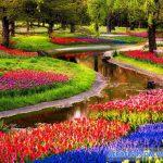 Vườn hoa Keukenhof