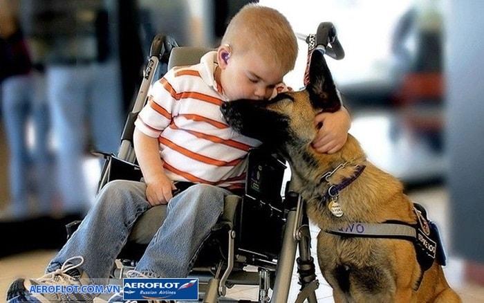 Dịch vụ vận chuyển chó trên chuyến bay Aeroflot