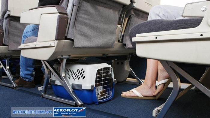 Mang theo động vật lên cabin máy bay Aeroflot