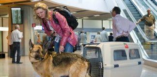 Mang theo động vật lên chuyến bay Aeroflot