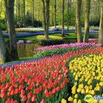 Khu vườn Keukenhof khu vườn hoa lớn nhất thế giới