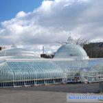 Vườn ươm Kibble Palace